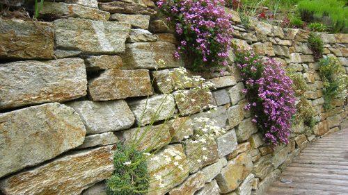 Blühende Mauer