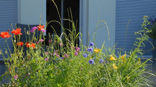die bunte Blumenwiese im Garten