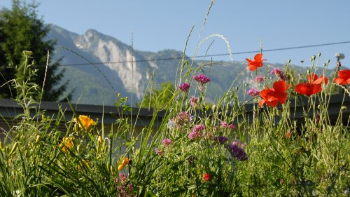 Blumenwiese mit Blick auf die Berge