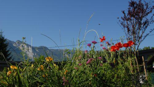 der zweite Blick auf die bunte Blumenwiese
