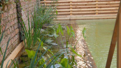 Wasserpflanzen am Rande des Beckens