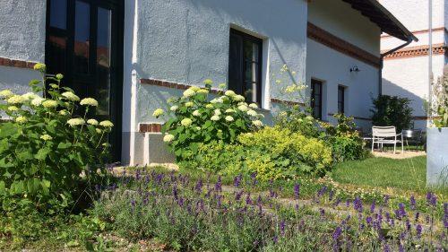 Schneeballhortensien und Lavendel begleiten den Hauseingang