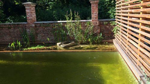 Schwimmteich mit einer interessanten Quelle im Pflanzstreifen