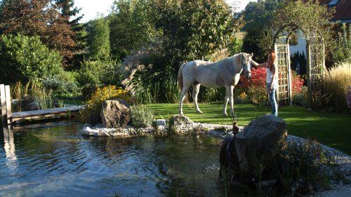 Auch das Pferd darf sich den Schwimmteich ansehen!