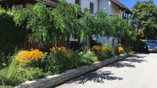 Straßenbegleitend eine Kleien Granitmauer, Stauden und Gräser, Rosenakazien