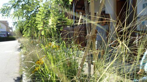 eine helle, lockere, sehr abwechslungsreiche Bepflanzung