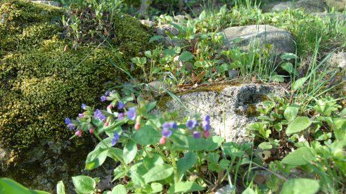 Moos, Steine, Gräser und Frühlingsboten