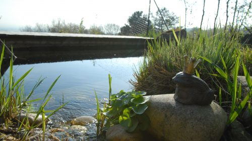 Froschkönig am Teich