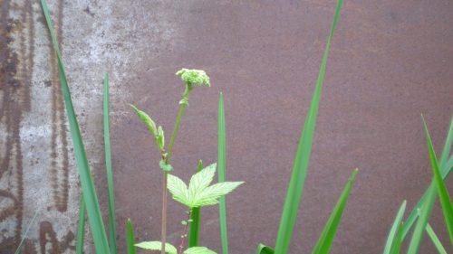 Wasserpflanzen vor einer Wand aus Cortenstahl