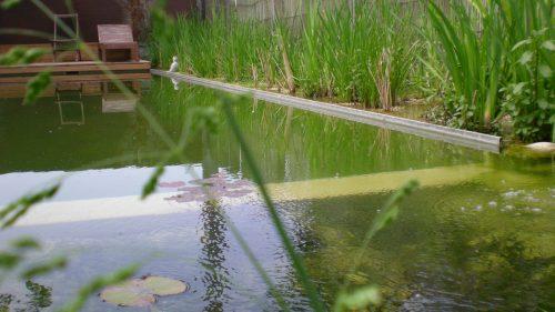 Schwimmteich aus der Froschperspektive