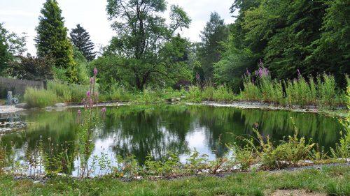 ruhige Wasserfläche mir angrenzendem Wald
