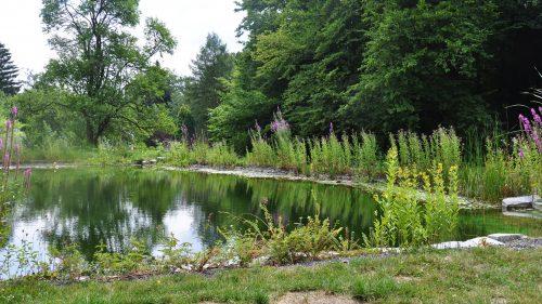 naturnaher Schwimmteich in einer Waldlichtung