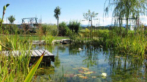 Holzsteg, Wasserfläche, Seerosen,