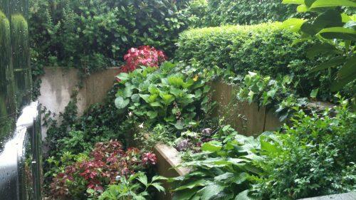 buntlaubige, artenreiche Bepflanzung
