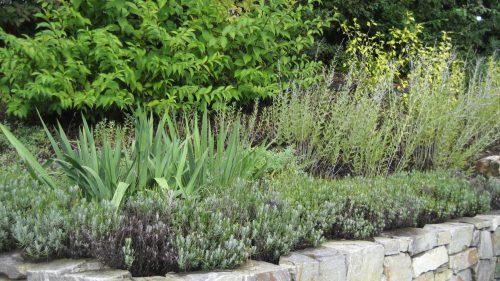 mediterrane Bepflanzung auf der Mauerkrone