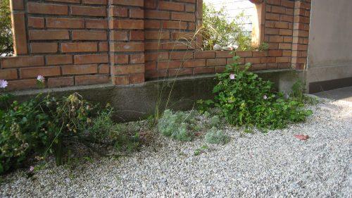 Kiesgarten am Rande des Parkplatzes bepflanzt