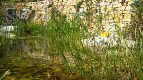 Sumpfpflanzen vor Steinmauer