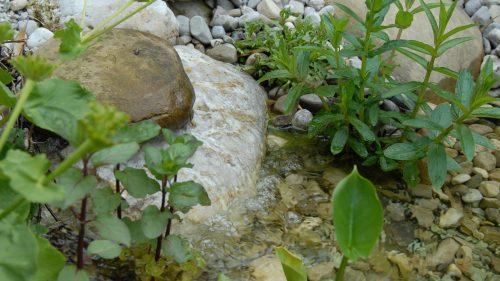 Quelle mit Wasserminze
