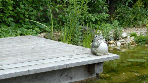 ein Frosch sitzt am Wasser