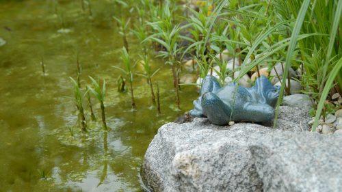 ein Frosch liegt am Wasser