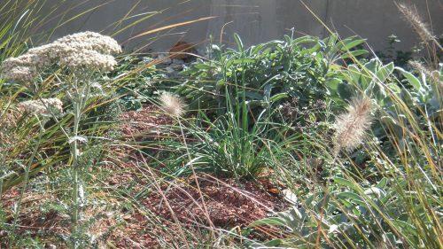 Gräser und trockenheit verträgliche Stauden