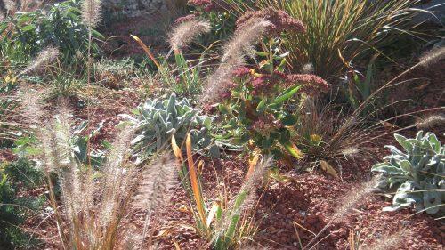 Pennsisetum, Sedum und mehr