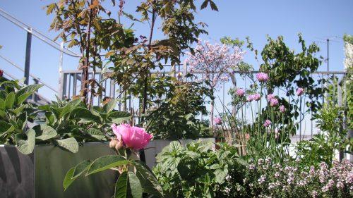 Kleingehölzen, Rosen und mediterranen Duft- und Blütenstauden