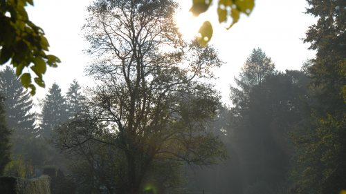 die Sonne blinzelt durch die Bäume