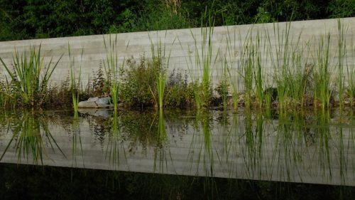 Schwimmteich mit Sichtbetonmauer im Hintergrund
