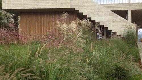 Gräserlandschaft im modernen Garten