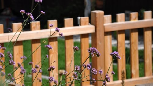 Gartenzaun mit Eisenkraut