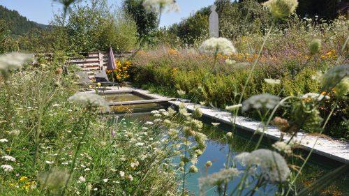 natürliche Sumpfvegetation am Rande dieses Biopools
