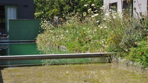 der Pflanzenfilter reinigt das Wasser